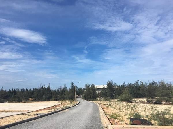 Con đường qua xã Quang Phú xuyên qua những đồi cát trắng xóa, trập trùng, xen lẫn rặng phi lao xanh rì. Ảnh: linh.neu