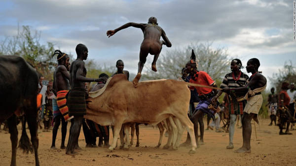 Bộ tộc Hamar, Ethiopia: Các chàng trai của tộc Hamar thực hiện nghi lễ nhảy bò để đánh dấu sự trưởng thành của mình. Mỗi người sẽ phải nhảy trên lưng những con bò bốn lượt để được công nhận quyền lấy vợ. Chỉ cần trượt chân là họ có thể bị thương. Ảnh: CNN.
