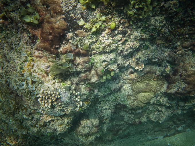 Nhiếp ảnh gia Đinh Thế Anh đã bắt trọn những khoảnh khắc đẹp của thảm sinh vật và ghi lại bức tranh thiên nhiên rực rỡ ẩn dưới đáy đại dương.