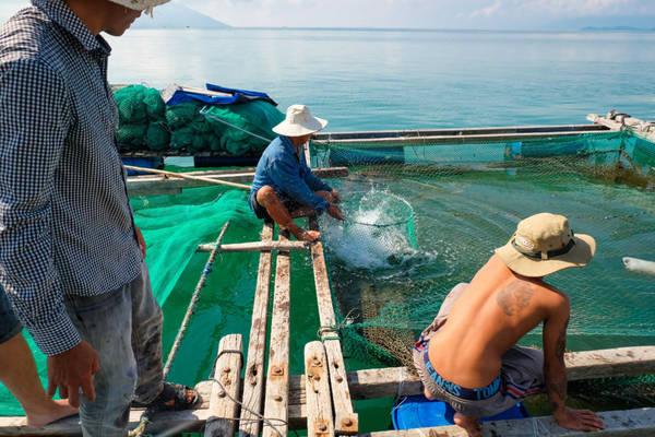 Trên đường ra đảo có nhiều bè hải sản của người dân với giá cả rất phải chăng. Chúng tôi đã nhờ anh Vắng mua hải sản từ trước, nhưng vẫn ghé vào mua thêm cá mú với giá 250.000 đồng/kg và tôm tít 170.000 đồng/kg.