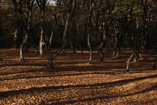 Rừng Hoia (Padurea Hoia), Romania: Khu rừng nổi tiếng huyền bí nhờ sự xuất hiện thường xuyên của UFO (vật thể bay không xác định) và các hiện tượng kỳ lạ khác. Người ta tin rằng ở trong rừng lâu có thể gây buồn nôn, phát ban và chóng mặt. Từng có những bức ảnh vật thể không xác định được xác nhận là ảnh thật.