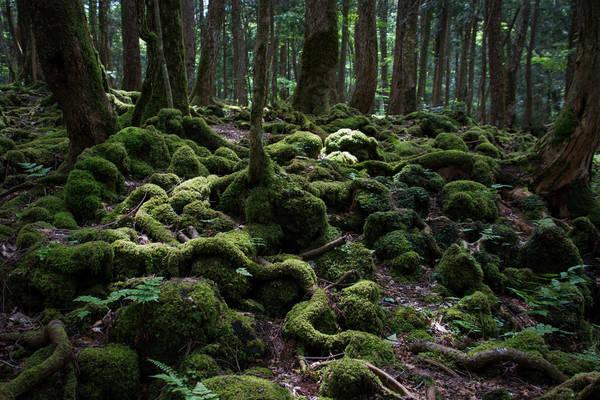 """Rừng Aokigahara, Nhật Bản: """"Aokigahara"""" có nghĩa là """"rừng cây xanh"""", nhưng cũng được biết đến là """"khu rừng tự tử"""", bởi đây là nơi nhiều người lựa chọn để tự kết liễu mình. Chính quyền đã làm mọi thứ để ngăn chặn như thường xuyên tuần tra khu rừng, lắp camera và biển chỉ dẫn. Người dân địa phương cũng khai báo cho cảnh sát những người đáng ngờ."""