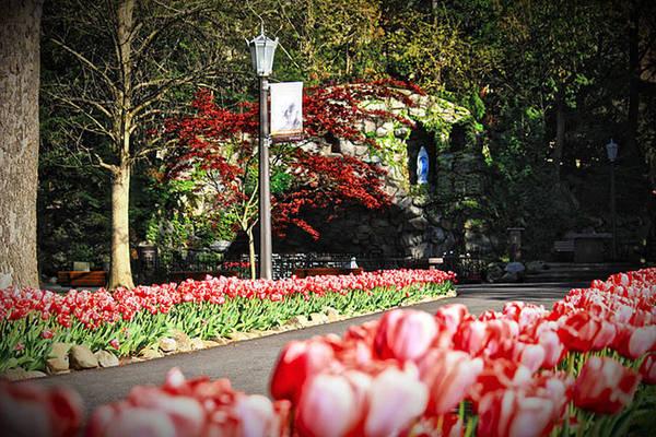 Hoa tuy-lip trải dọc lối đi.