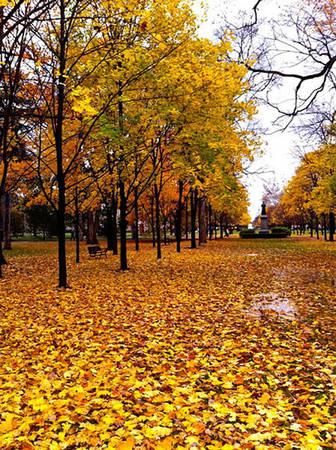 Đại học Notre Dame mùa lá rụng