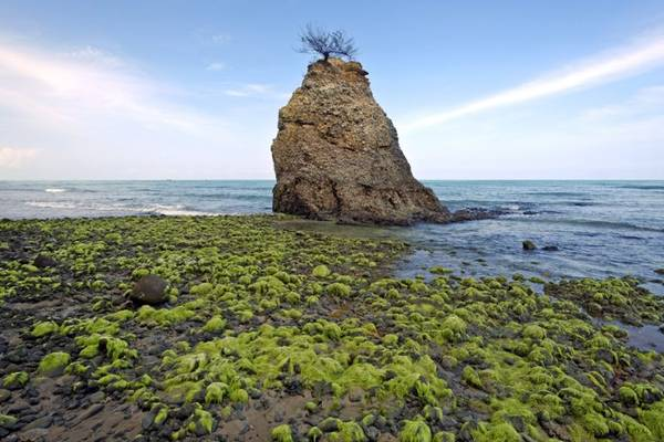 Bờ biển dài, kín gió, thủy triều lặng là nơi thích hợp cho rùa biển cư trú