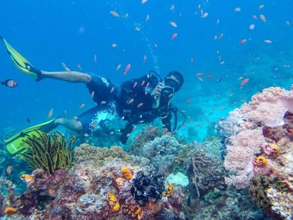 Lặn biển ở Sabah – Borneo là trải nghiệm thú vị