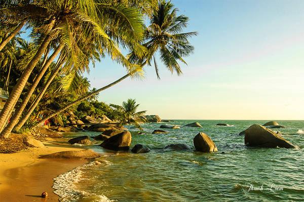 Một điểm đến mới được khai thác gần đây, biển đẹp lý tưởng cho các bạn thích đón bình minh - bãi Xếp - nơi có cây dừa nằm ngang.