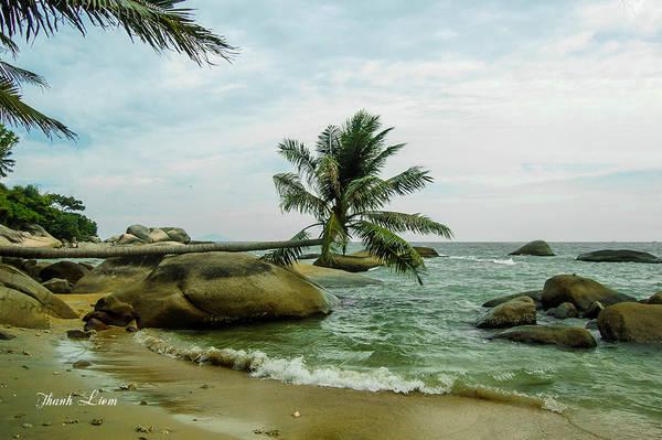 """Dân trên đảo thường gọi đây là"""" Cây dừa ngàn năm""""."""
