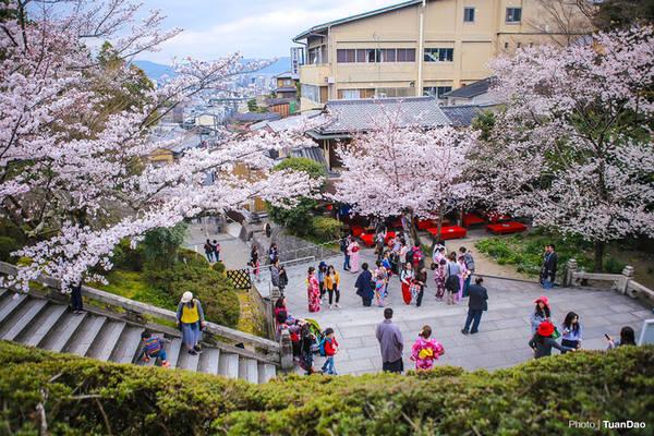 Là một trong số ngôi chùa cổ còn giữ lại được từ thời kỳ Nara (năm 710 - 794), Kiyomizu Dera (hay Thanh Thủy Tự) có diện tích rộng lớn với kiến trúc thiết kế đặc biệt luôn thu hút du khách. Thời điểm hoa anh đào nở rộ được coi là mùa cao điểm tham quan của ngôi chùa khi lượng khách lúc nào cũng đông đúc.