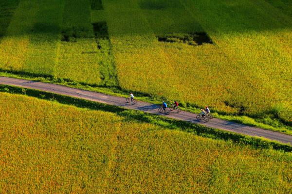 Ngoài ra du khách có thể thuê xe đạp, đạp quanh khu Tam Cốc để chiêm ngưỡng những cánh đồng lúa tuyệt đẹp. Ảnh: Hoàng Anh.
