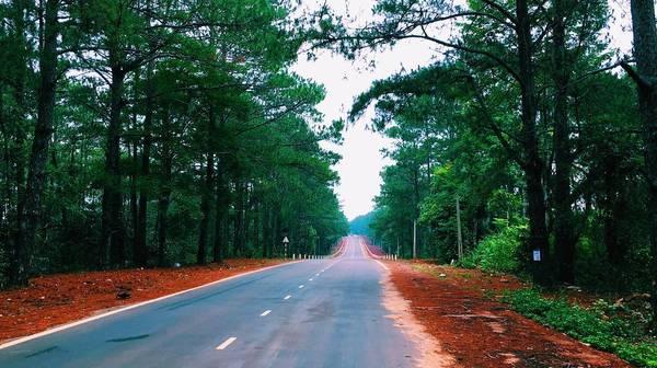 Con đường tuyệt đẹp với hai bên là đồi thông ở Măng Đen. Ảnh: sodababy