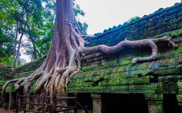 Những rễ cây mọc tràn lên đỉnh của ngôi đền, nhưng điều đặc biệt là chúng luôn mọc tránh khuôn mặt của những bức phù điêu