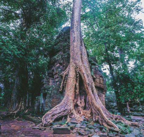 Ta Prohm là một ngôi đền đổ nát nhưng đầy hấp lực bởi những bộ rễ cây đại thụ - Ảnh: Mai Hương