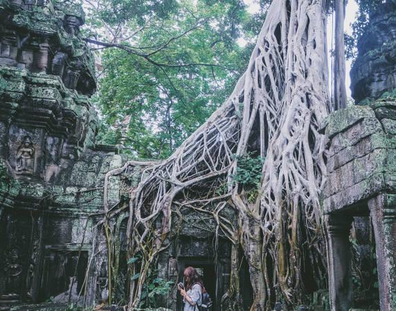 Những bộ rễ cây này không phải mọc từ dưới đất lên mà được mọc từ trên không xuống từ sự phát tán hạt giống của chim chóc