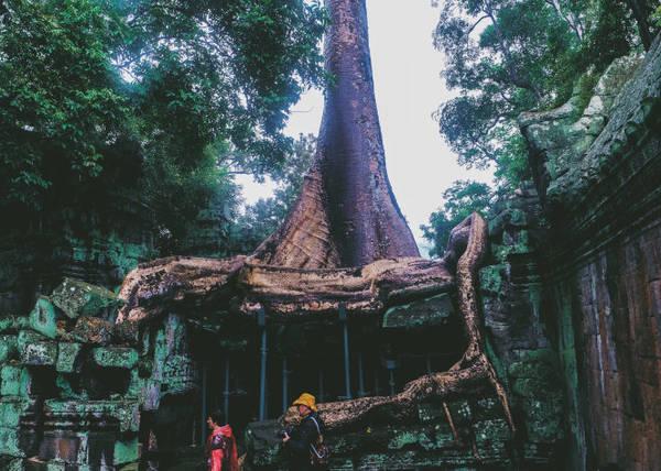 Nhiều nhánh rễ cắm sâu, ôm chặt lấy bức tường như muốn níu giữ lại ngôi đền khỏi sự tàn phá của thời gian