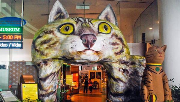 Người Trung Quốc tại Kuching tin rằng mèo đem lại may mắn. Ảnh: Andrew Watson
