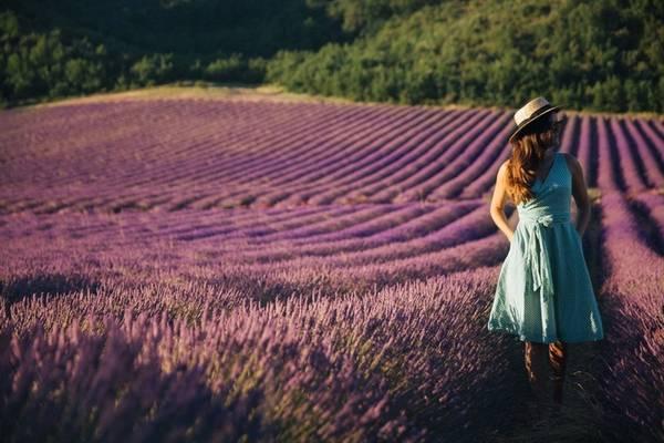 Nếu muốn ngắm nhìn những cánh đồng oải thanh bình, vắng bóng du khách, bạn nên tới Provence khoảng giữa tháng 7. Từ Paris, bạn có thể bắt tàu tới đây, sau đó di chuyển tiếp bằng ô tô đến các thị trấn.