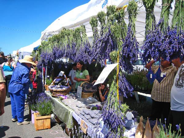 Trên cung đường này, du khách có thể ghé thăm các trang trại, nhà máy chưng cất nước hoa, tinh dầu và cửa hàng lưu niệm hay tham gia lễ hội hoa oải hương...