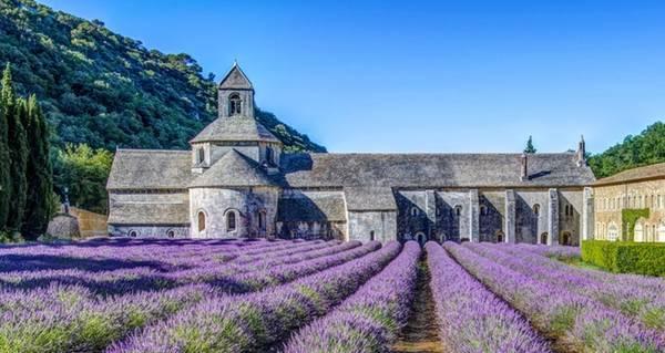 Tu viện cổ L'Abbey de Senanque cũng là điểm đến bạn không nên bỏ lỡ trên đường thăm Provence. Tu viện được xây dựng từ thế kỷ 12, nằm trên đồi Luberon, cách Les Goudes khoảng 2 dặm và cách 25 dặm về phía tây bắc của Aix-en-Provence. Hãy đến đây trước 9h và ở lại đến sau 19h để tận hưởng trọn vẹn vẻ đẹp của công trình này.