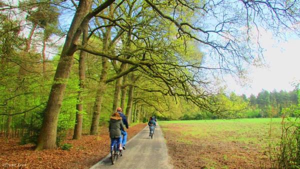 Công viên Park Hoge Veluwe là công viên nổi tiếng nhất Hà Lan, với 40 km đường dành cho xe đạp, đồng thời cung cấp 1.800 xe phục vụ khách tham quan miễn phí. Bạn nên đến đây từ lúc sáng sớm khi vừa mở cửa (8h) để nghe tiếng chim hót và hít thở bầu không khí thật trong lành.