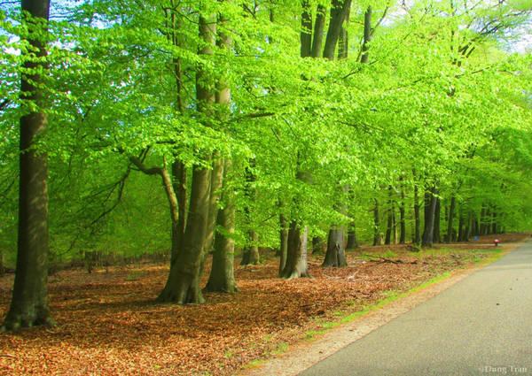 Không khí trong lành, không gian tràn ngập cây xanh.