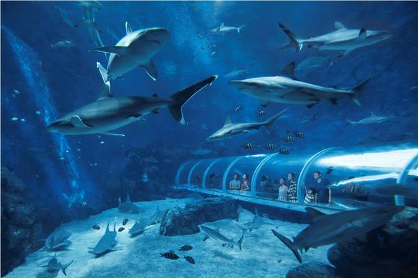 S.E.A.-Aquarium-Singapore-ivivu-4