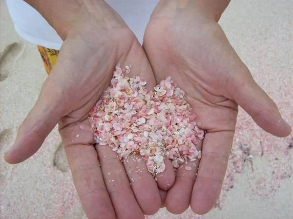 Những động vật cực nhỏ với vỏ hồng sáng tạo màu cho nền cát.