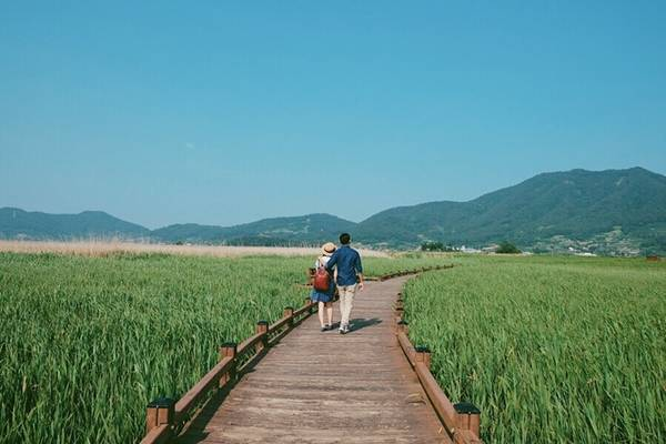 """Với du khách Việt Nam, thành phố Suncheon, Hàn Quốc là một điểm du lịch xa lạ, nhưng với người dân xứ củ sâm, đây lại là địa danh nổi tiếng, hàng năm thu hút hơn 2 triệu lượt khách tham quan. Suncheon còn được gọi bằng cái tên """"thành phố của hàng nghìn loài sếu"""" bởi vùng đất ngập mặn ở vịnh Suncheon là nơi trú đông của hơn 1.400 loài sếu, trong đó có nhiều loại quý hiếm trên thế giới."""