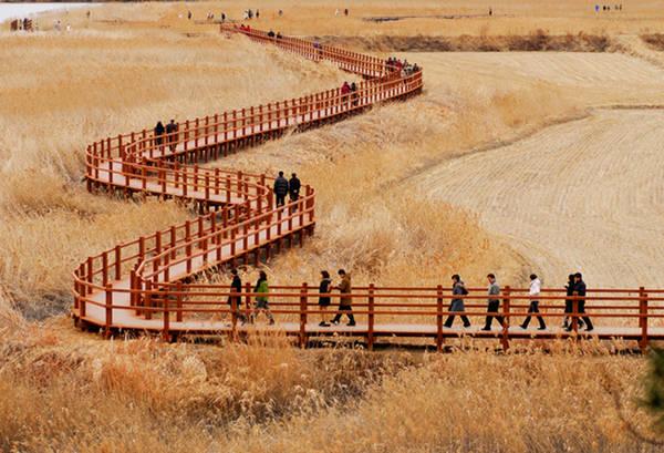 Con đường gỗ xuyên qua cánh đồng là điểm check-in và chụp hình yêu thích của hầu hết du khách khi đến đây. Vừa dạo bước chậm rãi ngắm cảnh, vừa hít thở bầu không khí trong lành, se lạnh của mùa thu, mọi ưu phiền của du khách dường như đều tan biến.