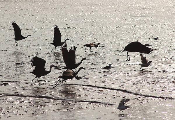 """Mùa thu cũng là lúc hơn 1.000 loài chim di chuyển từ khắp nơi trên thế giới về Suncheon để trú đông. Không ít nhiếp ảnh gia chọn thời điểm này để """"săn"""" những bức ảnh đẹp về loài sếu, hoặc lưu lại khoảnh khắc hoàng hôn bình yên trên vịnh Suncheon."""