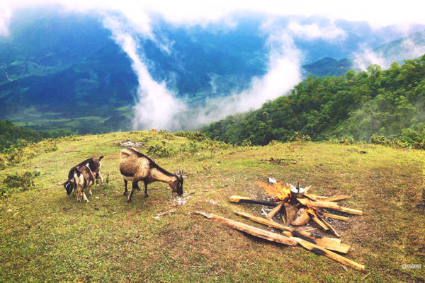 """Khu vực núi Cao Xiêm, Cao Ly khá thích hợp để các bạn có một buổi cắm trại đáng nhớ, nơi những """"đàn dê trắng nhởn nhơ quanh đồi""""."""
