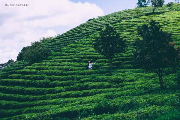Đồi chè Cầu Đất là tên gọi khác của doanh nghiệp chè Cầu Đất Farm, nằm ở thôn Trường Thọ, xã Xuân Trường, cách trung tâm thành phố Đà Lạt tầm 20 km.