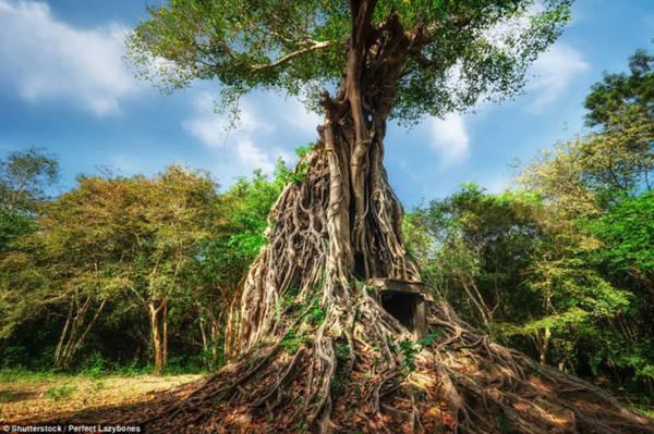 """Sambor Prei Kuk - hay còn gọi là """"ngôi đền trong rừng rậm"""" ở Campuchia - mới được UNESCO công nhận là di sản văn hóa thế giới. Ảnh: Shutterstock."""