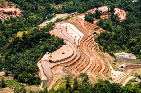 Mảng màu vàng của đất ruộng bậc thang giữa núi rừng - Ảnh: HẢI DƯƠNG