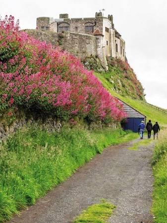 Đường mòn đầy hoa trên đảo