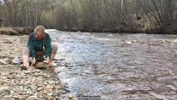 """Nhiều du khách có tham vọng lớn hơn nhiều. Dawne Mitchell cho biết: """"Họ thật sự mua quyền khai thác và thiết bị đến đào lòng sông. Bạn có thể học cách đào rất nhanh, còn vàng thì luôn ở đó""""."""