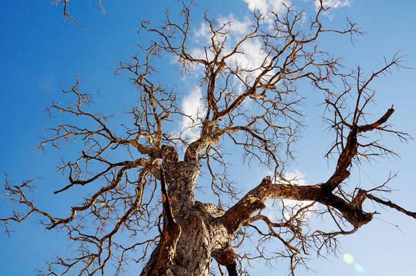 Hãy ngồi dưới tán cây giữa trời trưa nắng để thấy thế nào là vùng đất thừa nắng thừa gió, và để hiểu vì sao làn da tôi rám nắng, khuôn mặt của trò tôi đen đúa.