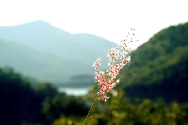 Khi đó, cảnh vật hai bên đường xơ xác, nước hồ Lòng Sông cạn đáy, những ngọn đồi trơ ra những khối đất đá cằn cỗi.