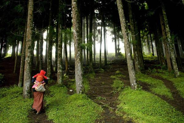 Bhutan là quốc gia duy nhất trên thế giới hấp thụ nhiều CO2 từ không khí hơn lượng thải ra. Nhờ 72% diện tích là rừng và số lượng khu công nghiệp thấp, vương quốc xanh này hấp thụ 6 triệu tấn C02 một năm cho Trái đất, trong khi chỉ thải ra 1,5 triệu tấn. Ảnh: Lynsey Addario.
