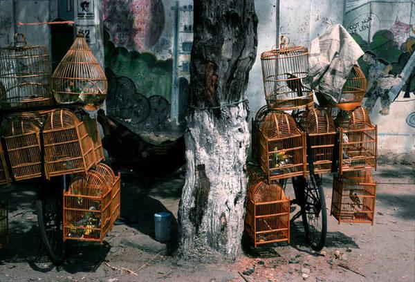 Những chiếc xe đạp bán rong chim vốn rất quen thuộc với người Việt những năm 90.