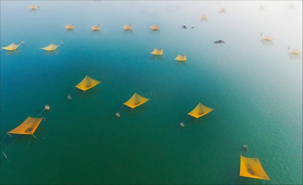 Màu vàng của những chiếc rớ nổi bật trên nền xanh của biển ở thị xã Sông Cầu (Phú Yên), làm liên tưởng đến những cánh chim biển đang bay theo đàn đầy quyến rũ và yên bình. Ảnh: Nguyễn Minh Tùng.