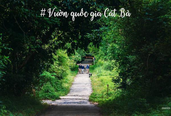 Một hành trình nên thử khác là hiking xuyên Vườn quốc gia Cát Bà, một trong những khu dự trữ sinh quyển độc đáo được UNESCO công nhận. Đây là thiên đường thực sự cho những người mê khám phá thiên nhiên và thử thách bản thân.
