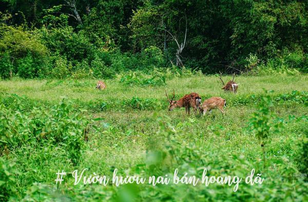 Tuyến điển hình chỉ khoảng 1,8 km, trong khi tuyến dài nhất vượt núi tới làng chài Việt Hải khoảng 16 km. Bạn có thể gặp vô số loài động thực vật đặc hữu, may mắn thì có thể được thấy voọc Cát Bà - biểu tượng của quần đảo.