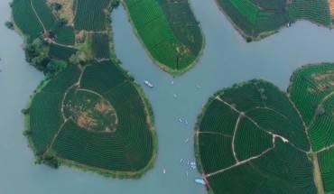 Đồi chè Nghệ An. Ảnh: CLB Kayak Hạ Long & ĐTH Nghệ An