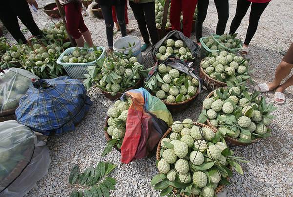 Người dân đưa na xuống chợ để bán buôn, mỗi sọt na như vậy nặng từ 20 đến 25 kg. Giá na đầu mùa dao động từ 30.000 đến 80.000 đồng/kg.