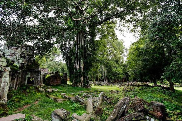 """Đền Preah Khan còn có tên gọi là Jayasri (hai tên gọi này đều có ý nghĩa là """"Gươm Thánh""""), là một trong những ngôi đền vĩ đại của Angkor."""