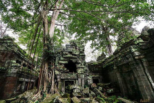Trong số đó, Ta Prohm là ngôi đền đặc biệt nhất trong quần thể Angkor. Ngôi đền được xây theo phong cách Bayon vào khoảng cuối thế kỷ 12 và đầu thế kỷ 13.