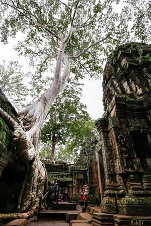 Ta Prohm được bao bọc trong rừng nhiệt đới, với các rễ cây cổ thụ bám lấy các trụ đá, mái trần hay xung quanh các vách tường. Nhưng chính nhờ điều đó đã khiến đền Ta Prohm trở nên đặc biệt hơn và huyền bí đến lạ kì.