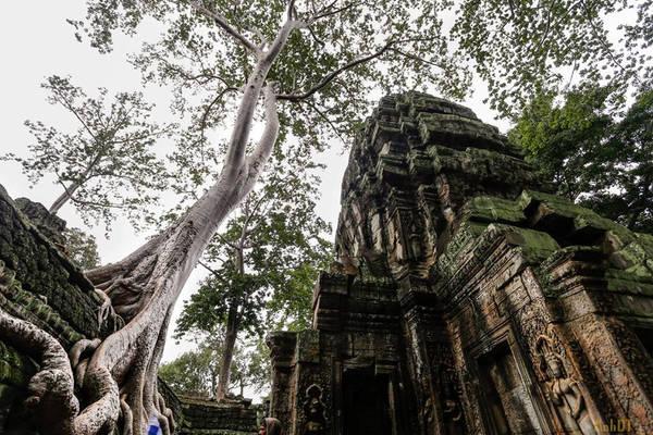 Ta Prohm như đưa con người ta như đến với một thế giới khác, nơi thiên nhiên hoàn toàn ngự trị. Nếu Angkor Wat là chứng tích cho sức mạnh và tài năng của những con người Khmer cổ phi thường, Ta Prohm lại khiến người ta liên tưởng đến sức mạnh vĩnh hằng đầy kỳ diệu của thiên nhiên.
