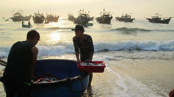 Tàu cá của ngư dân trở về bến Nhân Trạch lúc bình minh - Ảnh: L.GIANG